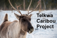 Telkwa Caribou Project